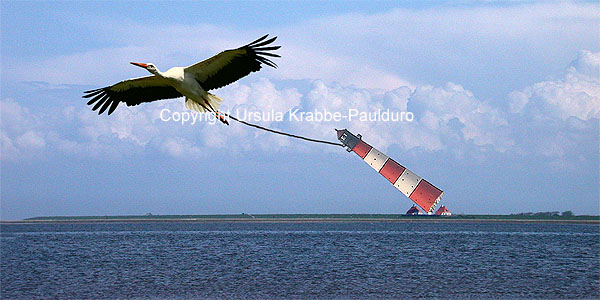 "Photo-Illusion ""Migratory bird"" as print on canvas"