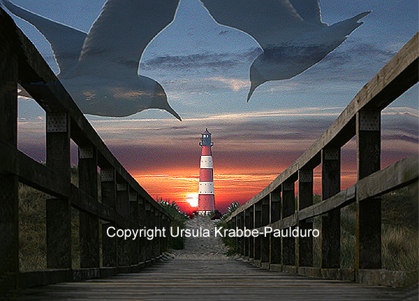 "Photo-Illusion ""Predator gulls"" as print on canvas"